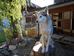 Besuch bei den Schlittenhunden
