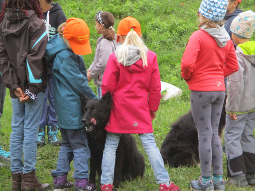 Hundesport Linth